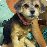 Adopt A Pet :: Lydia - Gainesville, FL
