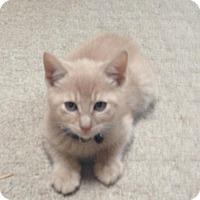 Adopt A Pet :: Reid - Raritan, NJ