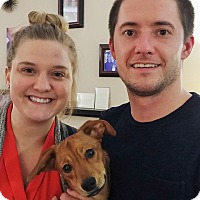 Adopt A Pet :: Newton (Baby Bear) - Plain City, OH