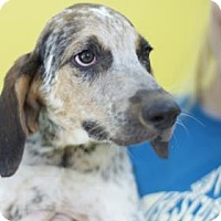 Adopt A Pet :: Baton Rouge - Bradenton, FL
