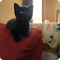 Adopt A Pet :: Oasis - Sparta, NJ