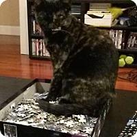 Adopt A Pet :: Mercury - Bellevue, WA
