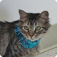Adopt A Pet :: Dovey - Chambersburg, PA
