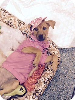 German Shepherd Dog Mix Dog for adoption in Fort Lauderdale, Florida - WILLOW & JOHNNY
