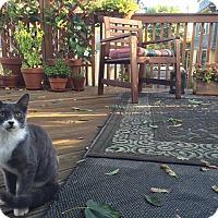 Adopt A Pet :: Sloan - Courtesy Listing - Sparta, NJ