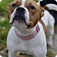 Adopt A Pet :: Prinny - Midland, MI