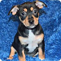 Adopt A Pet :: Kenai - Yreka, CA