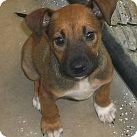 Adopt A Pet :: Stryker - Orangeburg, SC