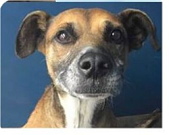 Hound (Unknown Type) Mix Dog for adoption in Springdale, Arkansas - Outlaw