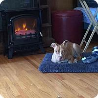 Adopt A Pet :: Stich - Covington, TN