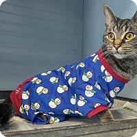Adopt A Pet :: Lucy - Troy, MI