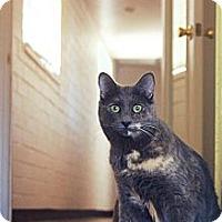 Adopt A Pet :: Misty - Tucson, AZ