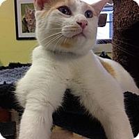 Adopt A Pet :: Dorito - Byron Center, MI