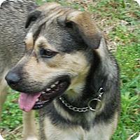 Adopt A Pet :: Wiggles - Ormond Beach, FL