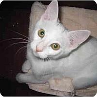 Adopt A Pet :: Cloud - San Ramon, CA