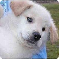 Adopt A Pet :: Tanner - Rigaud, QC