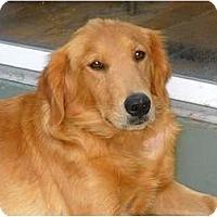 Adopt A Pet :: Daffodil - Denver, CO