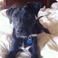 Adopt A Pet :: Cole - Sunderland, MA