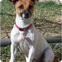 Adopt A Pet :: LIBERTY (Libby) - Phoenix, AZ