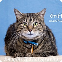 Adopt A Pet :: Griffin - Oklahoma City, OK