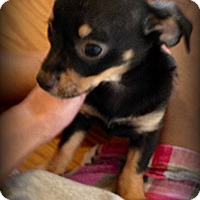 Adopt A Pet :: Bailey - Silsbee, TX
