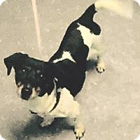 Adopt A Pet :: Estrella - Orlando, FL