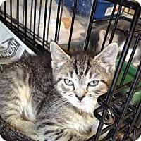 Adopt A Pet :: Dee - Island Park, NY