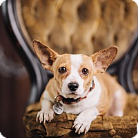Adopt A Pet :: Crouton - Portland, OR