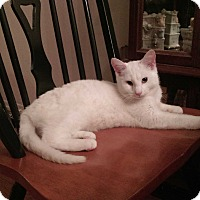Adopt A Pet :: Cirrus - Berkeley Hts, NJ