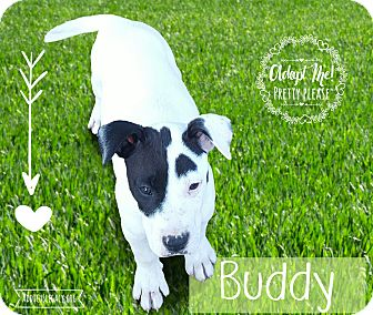 German Shepherd Dog Mix Puppy for adoption in West Hartford, Connecticut - Buddy