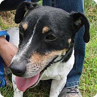Adopt A Pet :: Dewey - Erwin, TN