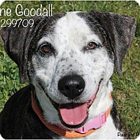 Adopt A Pet :: Jane Goodall - Troy, MI