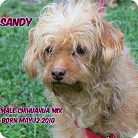 Adopt A Pet :: Sandy - Huddleston, VA