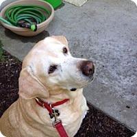 Adopt A Pet :: Sara - San Francisco, CA