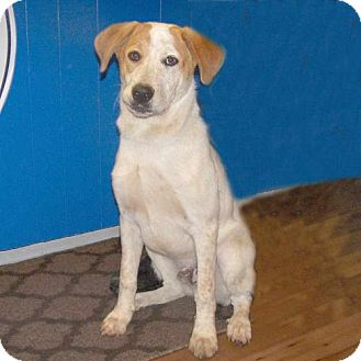 Pointer Mix Dog for adoption in Fayetteville, Tennessee - 16-d08-001 Mickey