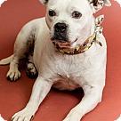 Adopt A Pet :: Tinker Bell