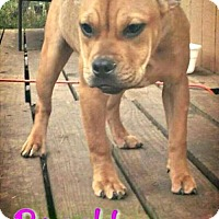 Adopt A Pet :: Brooklyn - Killeen, TX