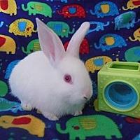 Adopt A Pet :: Cashmere - Scotts Valley, CA