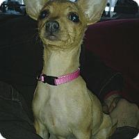 Adopt A Pet :: Grace - Flossmoor, IL