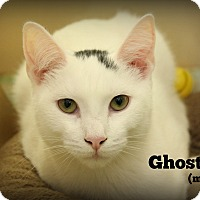 Adopt A Pet :: Ghost - Springfield, PA