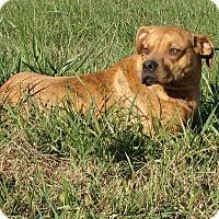 Adopt A Pet :: Rutz - Cameron, MO