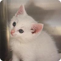 Adopt A Pet :: Ares - San Jose, CA
