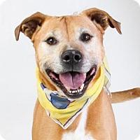 Adopt A Pet :: *BANJO - Sacramento, CA