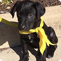 Adopt A Pet :: Baby Boomer - Rockville, MD