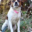 Adopt A Pet :: Annie-May