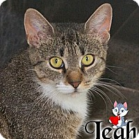 Adopt A Pet :: Leah - River Edge, NJ