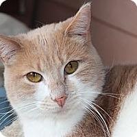 Adopt A Pet :: Camille - Santa Monica, CA