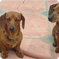 Adopt A Pet :: Gypsy & Roxie - San Jose, CA