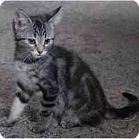 Adopt A Pet :: Bubba Joe - Portland, OR