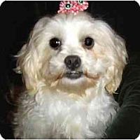 Adopt A Pet :: Jeannie - Mooy, AL